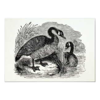Vintage Canadian Goose Bird - Geese Birds Template 9 Cm X 13 Cm Invitation Card