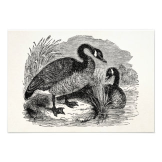 Vintage Canadian Goose Bird - Geese Birds Template Personalized Invite