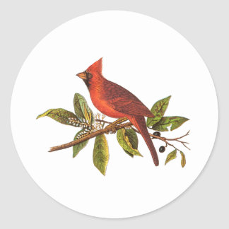 Vintage Cardinal Song Bird Illustration - 1800's Classic Round Sticker