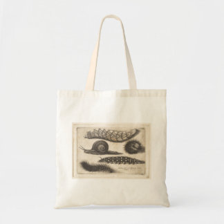 Vintage Caterpillar Snail Nature Insect (56) Tote Bag