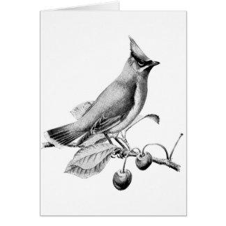 Vintage Cedar Waxwing Bird (Blank Inside), Card