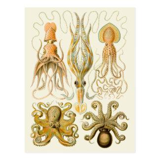 Vintage Cephalopods Postcard