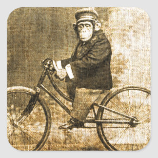 Vintage Chimpanzee on a Bicycle Square Sticker