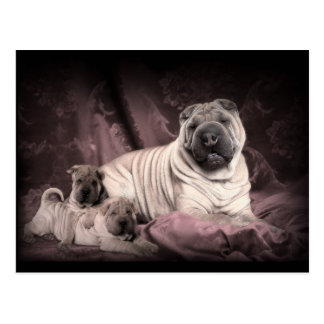 Vintage Chinese Shar Pei Wrinkles, Puppy Dogs Postcard