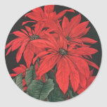 Vintage Christmas Blooming Red Poinsettia Flowers Round Sticker
