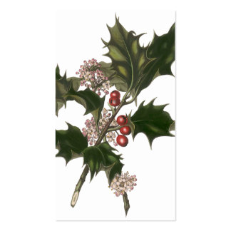 Vintage Christmas, Green Holly Plant with Berries Pack Of Standard Business Cards