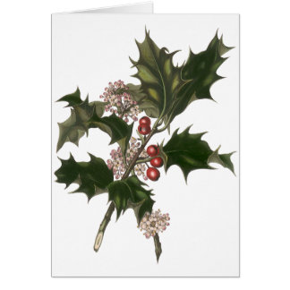 Vintage Christmas, Green Holly Plant with Berries Greeting Card