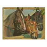 Vintage Christmas Horses Postcards