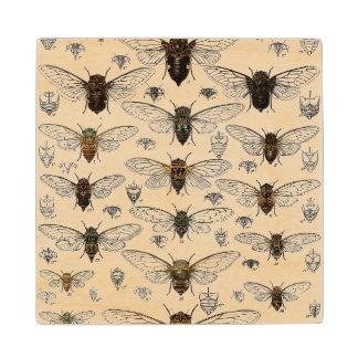 Vintage Cicadas Illustration Maple Wood Coaster