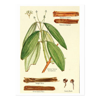 Vintage cinnamon illustration postcard recipe card