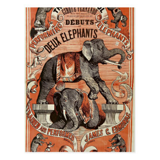 vintage circus elephant show postcard