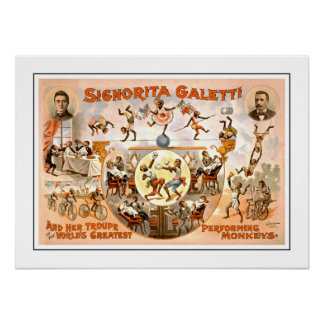 Vintage Circus Performing Monkeys Poster