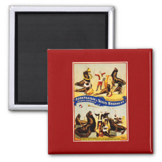 Vintage Circus - Sea Lions and Seals Square Magnet