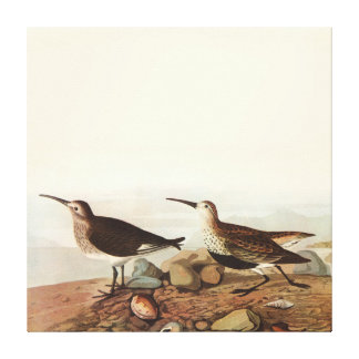 Vintage Coastal Birds Stretched Canvas Prints
