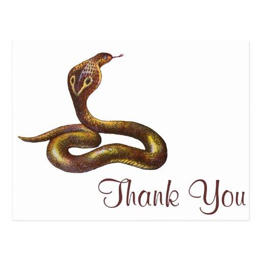 Vintage Cobra Snake Illustration Post Cards