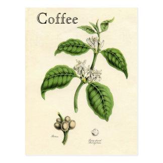Vintage Coffee Plant Postcards