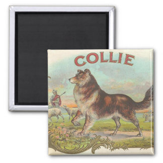 Vintage Collie Square Magnet