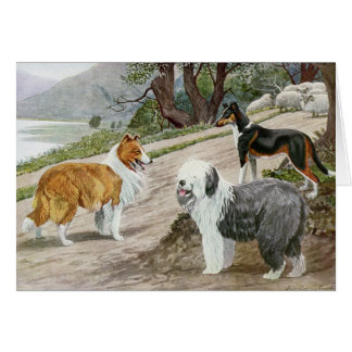 Vintage Collies and a Sheepdog, Card