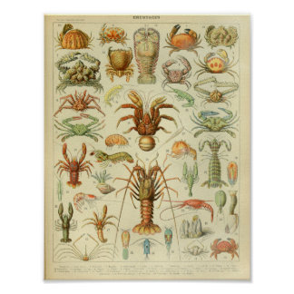 Vintage Color Sea Life Art Print