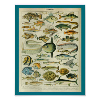 Vintage Color Sealife Fish Print