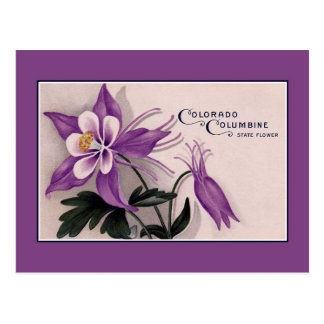 Vintage Colorado State flower, Columbine Postcard
