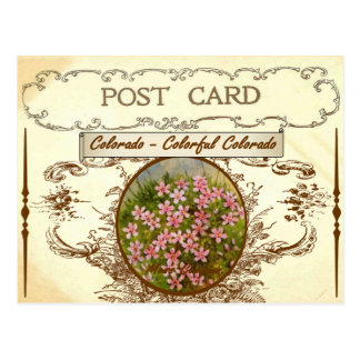 Vintage Colorado State Flower Postcard