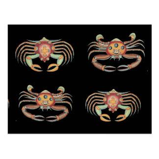 Vintage Colorful Crab Drawing Postcard