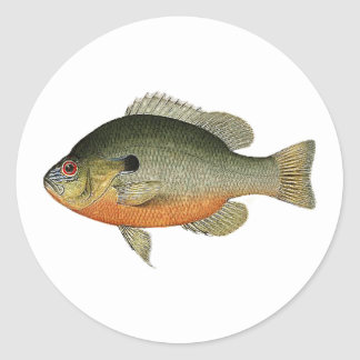 Vintage Colorful Sunfish Illustration Classic Round Sticker