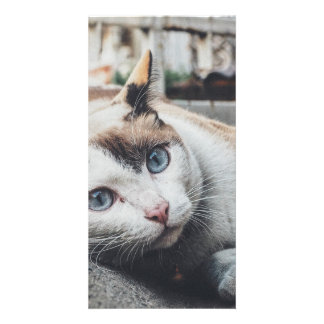 Vintage Colors Cat Photo Card Template