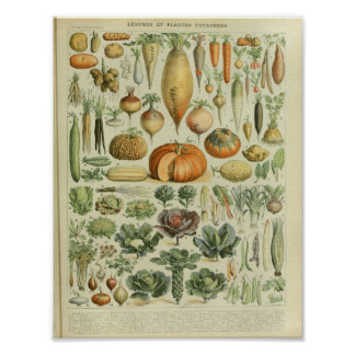 Vintage Colour Vegetable Art Print