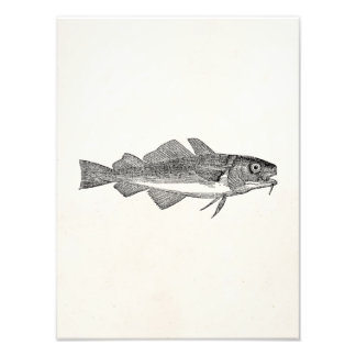 Vintage Common Cod Fish - Aquatic Fishes Template Photo Print
