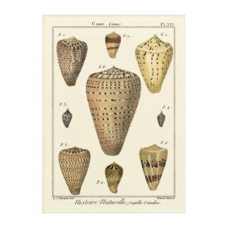 Vintage Cone Shells Acrylic Wall Art