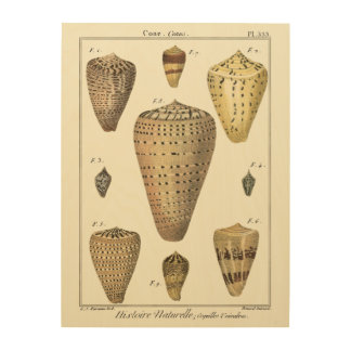 Vintage Cone Shells Wood Print