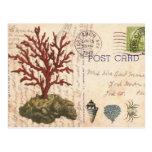 Vintage Coral and seashells postcard