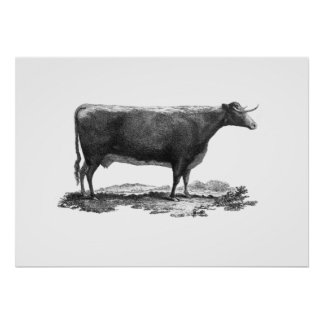 Vintage cow etching poster