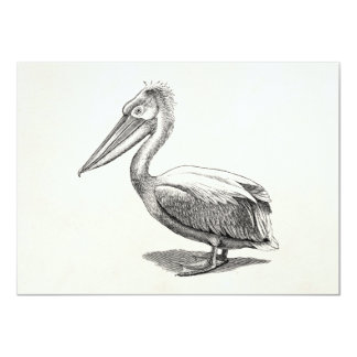 Vintage Crested Pelican Antique Bird Template 11 Cm X 16 Cm Invitation Card