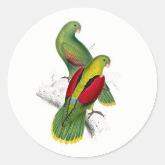 Vintage Crimson Winged Parakeet Round Sticker