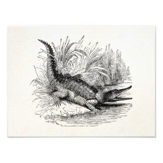 Vintage Crocodile - Reptile Template Blank Photograph