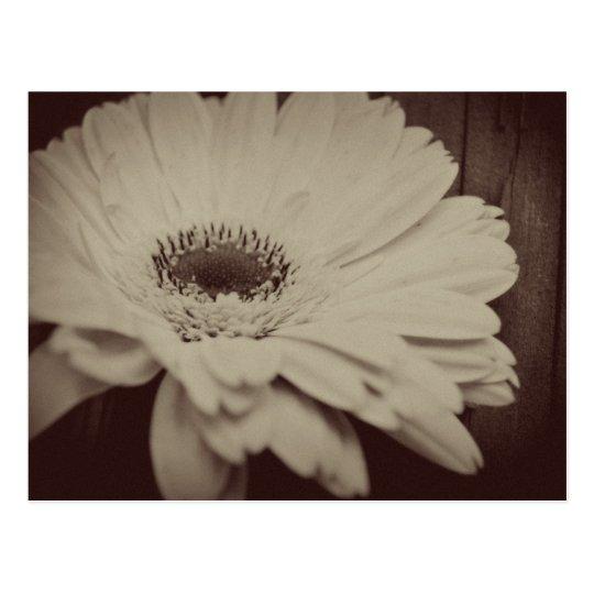 Vintage Daisy Postcard