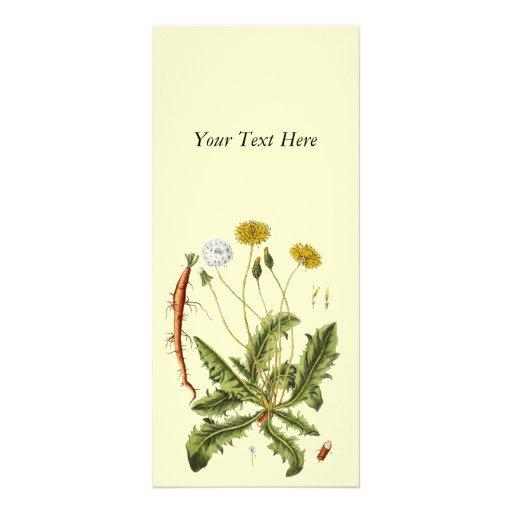 Vintage Dandelion Illustration Full Color Rack Card