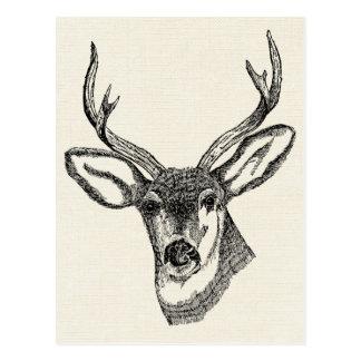 Vintage Deer Postcard