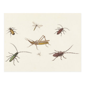 Vintage design with seven different insects postcard