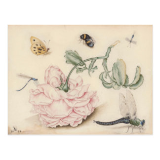 Vintage design with with a pink rose and insects postcard