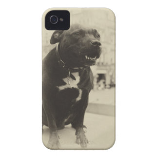 Vintage dog iPhone 4 covers