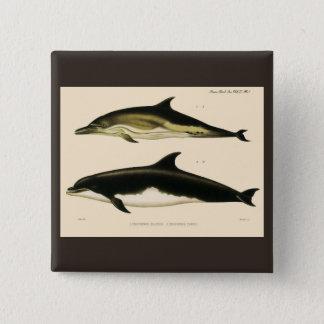 Vintage Dolphins, Marine Animals and Mammals 15 Cm Square Badge