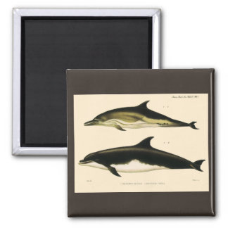 Vintage Dolphins, Marine Animals and Mammals Magnet