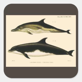 Vintage Dolphins, Marine Animals and Mammals Square Sticker