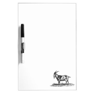 Vintage Domestic Goat Illustration - 1800's Goats Dry Erase Board