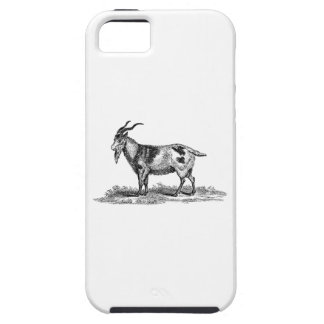 Vintage Domestic Goat Illustration -1800's Goats iPhone 5 Covers