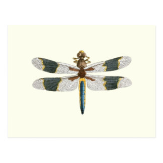 Vintage Dragonfly Drawing Antique Insect Artwork Postcard